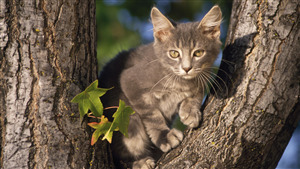 Animal Cat Sitting on Tree