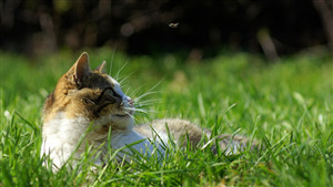 Animal Cat in Green Grass