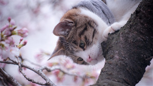 Animal Cat on Tree