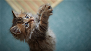 Baby Cat Wallpaper Download