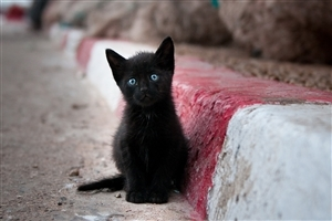 Black Cat with Blue Eye HD Photo