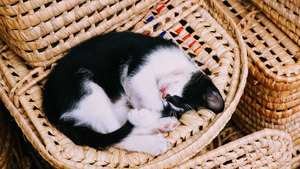 Black and White Cat Sleeping in Basket