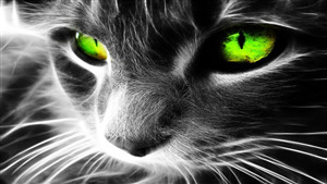 Cat Green Eye Superb Photo