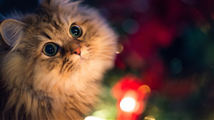 Cat Kitten Superb Wallpaper