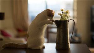 Cat Looking in Jug