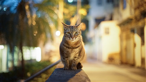 Cat Photo in Night Lighting