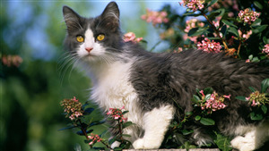 Cat Superb Photo Download
