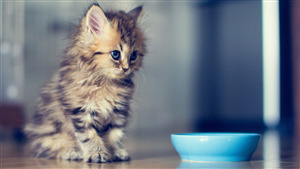Charming Cat Baby Wallpaper