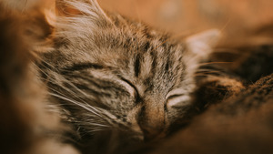 Cute Cat Sleeping in 5K Wallpaper