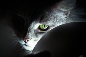 Cute Cat Eye in Black Background