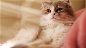 Free Download Images of Cat