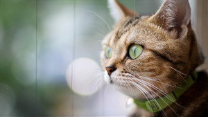 Free Download Wallpaper of Cat