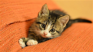 Lovely Cat Baby Wallpaper
