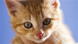 Pretty Cat Baby Wallpaper