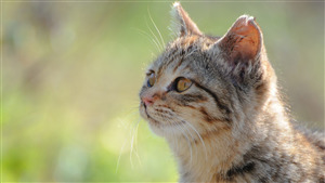 Pretty Cat Pic Download