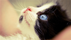 Sky Eye of Cat Photo