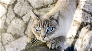 Sky Eye of Cat Superb Wallpaper