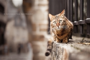 Street Cat of India Photo