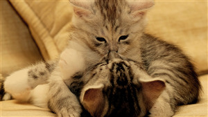 Two Cat Kissing Together