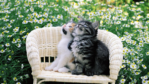 Two Cat Sitting on Chair at Garden