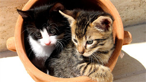 Two Cat in Basket