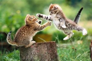 Two Child Cat Fighting