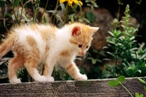 White and Yellow Cat HD Wallpapers