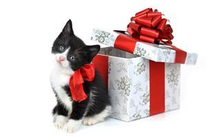 Balck and White Cat with Christmas Gift Box Image
