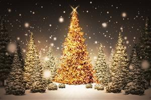 Beautiful Collection of Christmas Trees Wallpaper