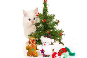 Cat behind Christmas Tree and Toys