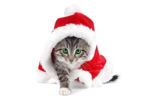 Funny Cat with Christmas Clothe on Holiday