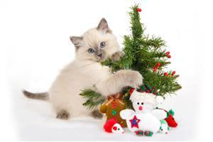 Nice Cute Cat with Christmas Tree Wallpaper