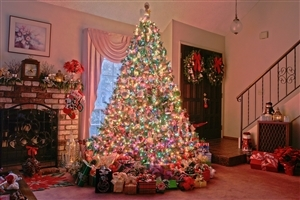 Photos of Beautiful Big Christmas Tree on Holidays