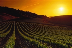 Beautiful Sunrise Scene of Napa Valley in United States Tourist Place Desktop Wallpaper