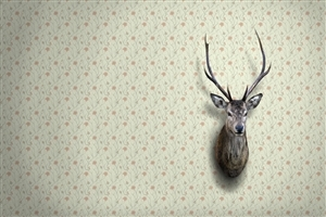 Deer Face on Wall Creative Wallpaper