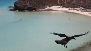 Black Crow Flying Above the Ocean 5K Wallpaper