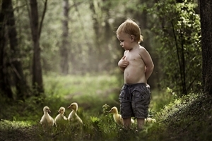 Cute Little Baby Boy with Chicks in Park HD Images