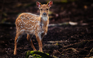 Beautiful Animal Deer in Jungle Pics