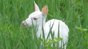 Charming White Deer Baby