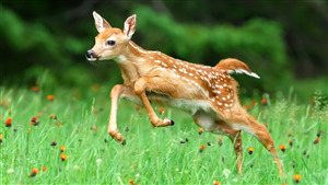 Cute Baby Deer Running 4K Wallpaper