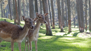 Cute Deer in Forest