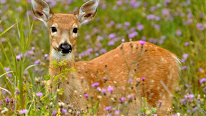 Deer Awesome Pic Download
