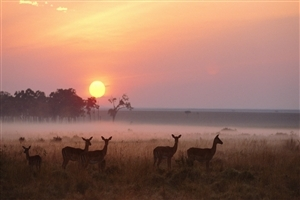 Deer During Sunset Wallpaper Background