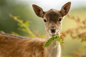 Deer Eating Grass in Jungle