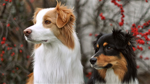 2 Dog Good Looking Photo