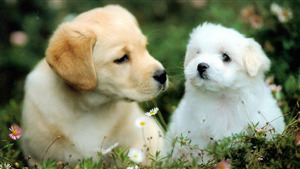 2 Lovely Dog Puppy