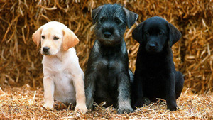 3 Cutest Dog Puppies