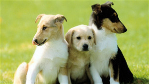 3 Lovely Dogs Image