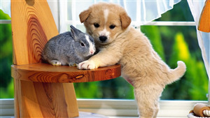 Amazing Photo of Cutest Dog with Rabbit