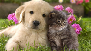 Cat Love With Dog Wonderful Wallpaper